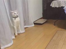 Смешные коты и кошки ноябрь 2016.